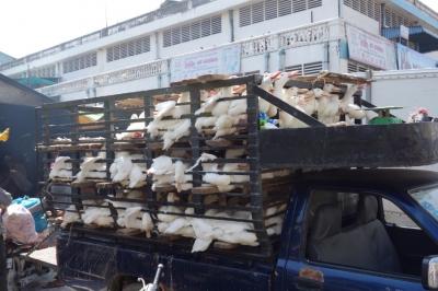 PhnomPenh201412-618.jpg