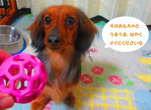 2015-03-toy11.jpg