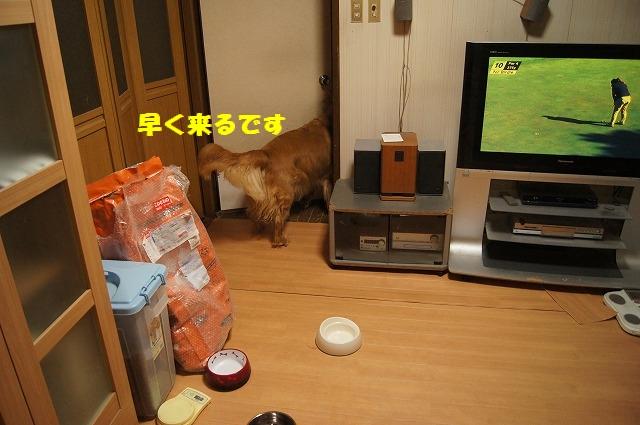DSC03805.jpg
