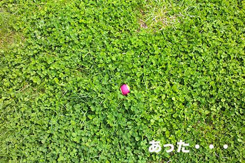 201504241840498e5.jpg
