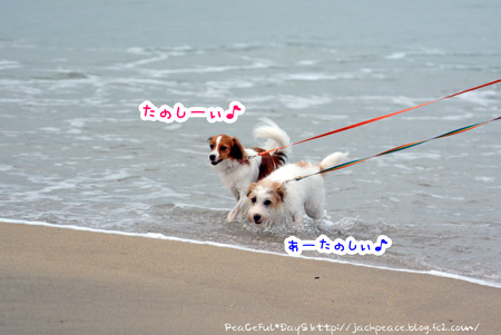 150709_umi3.jpg