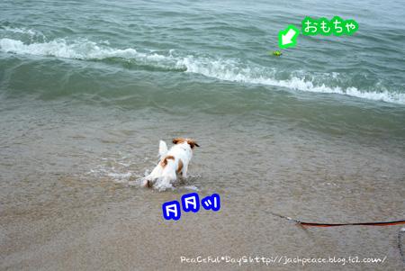150709_umi5.jpg