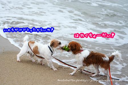 150709_umi9.jpg