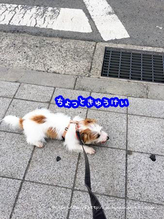 150713_sanpo7.jpg