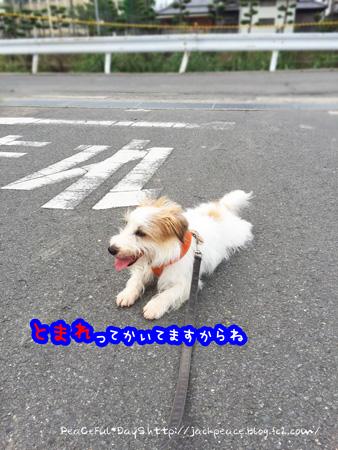 150713_sanpo8.jpg