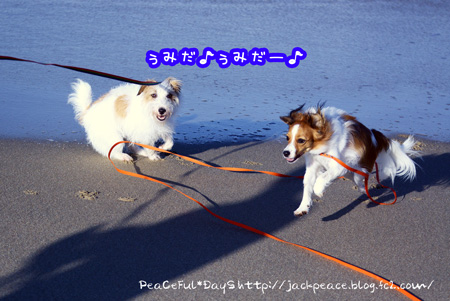 150714_umi.jpg
