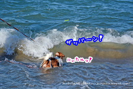 150714_umi9.jpg