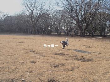 いつもの公園20150211-2