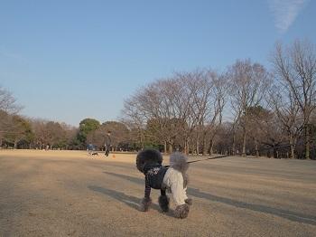 いつもの公園20150211-5