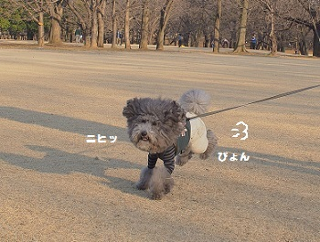 いつもの公園20150211-4 - コピー