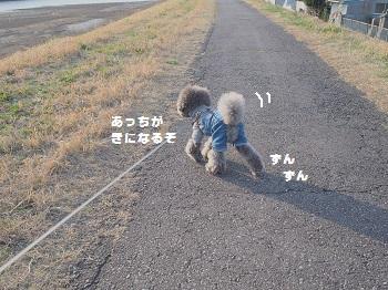 川さんぽ20150321-5