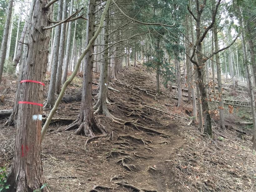 doudokoroyama30.jpg