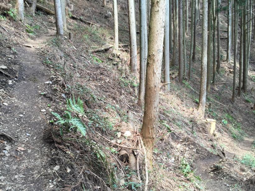 kagenobuyama07.jpg