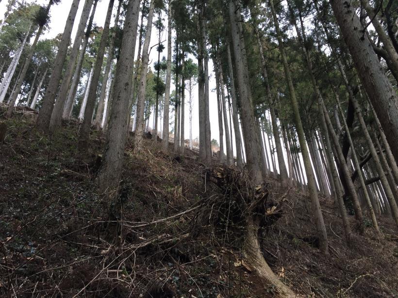 kagenobuyama13.jpg