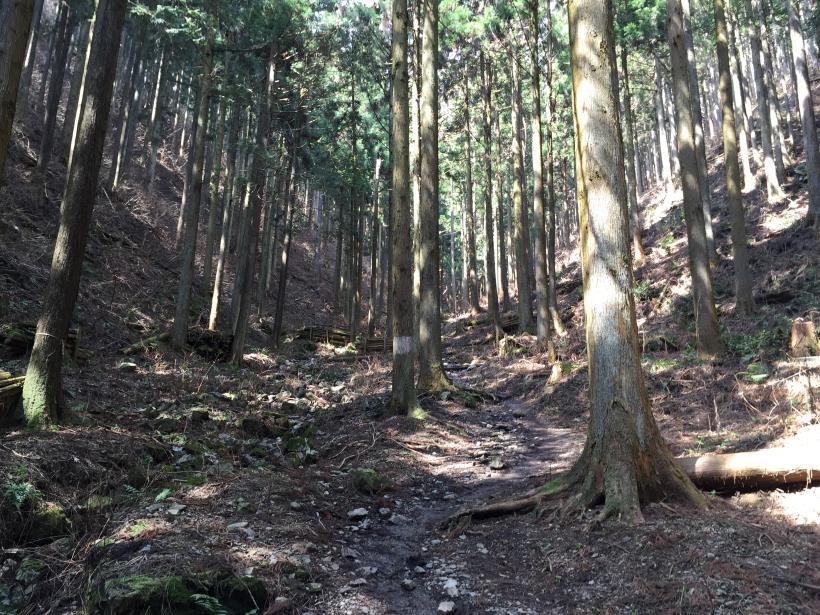 yagosawa17.jpg