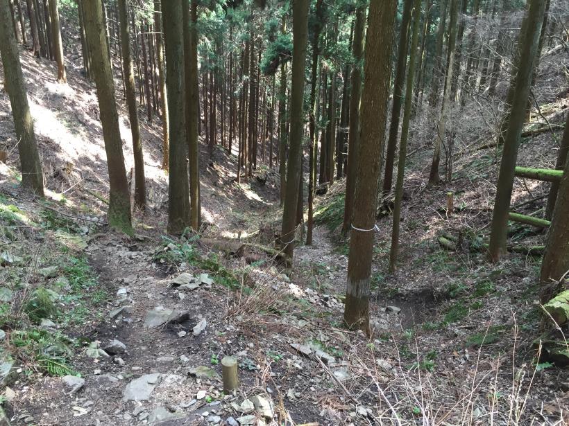 yagosawa28.jpg