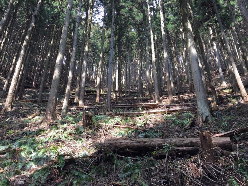 yagosawa31.jpg