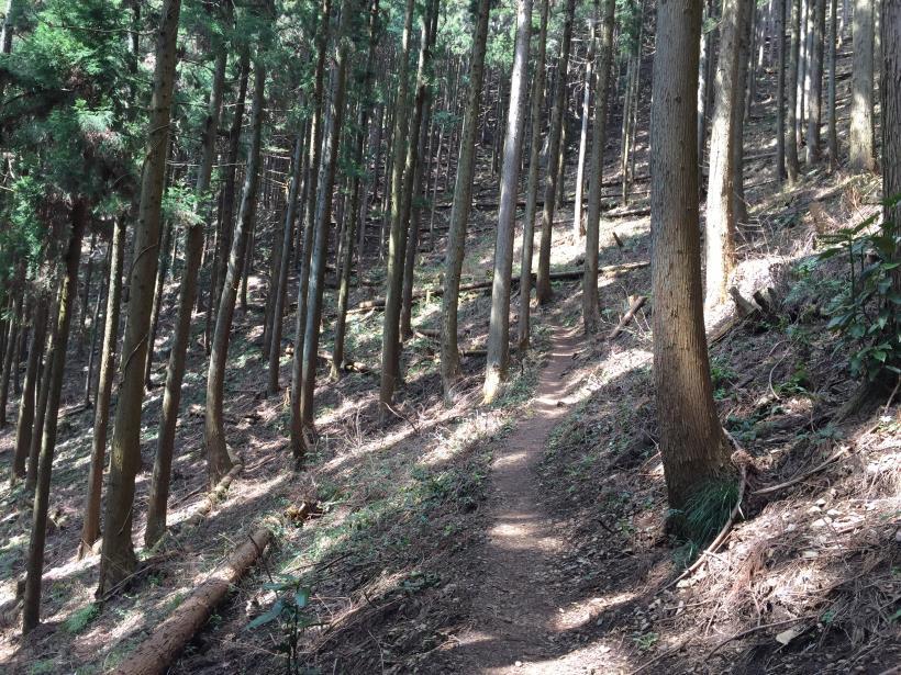 yagosawa33.jpg