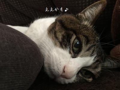 横取り銀③-1