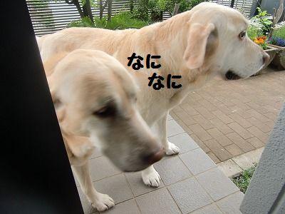 CIMG3278.jpg