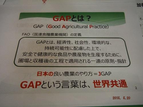 gap-jyosei-14.jpg