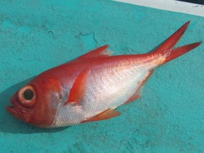 赤銀キンメ