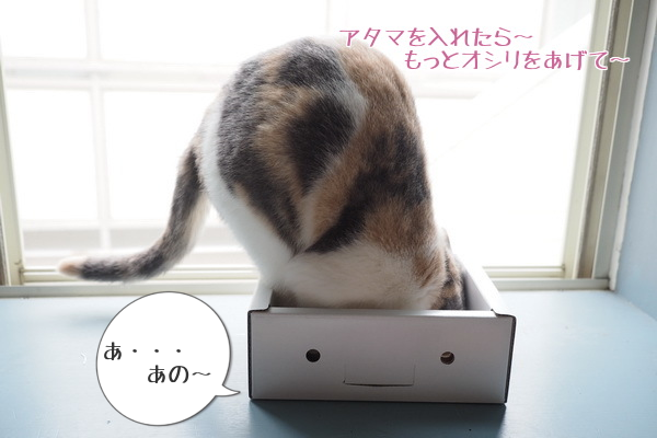 20150705232306a2c.png