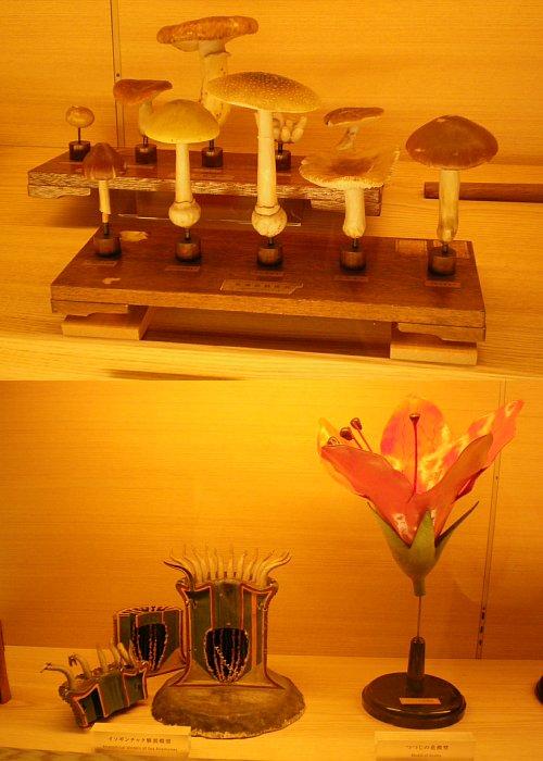 島津製作所・植物模型