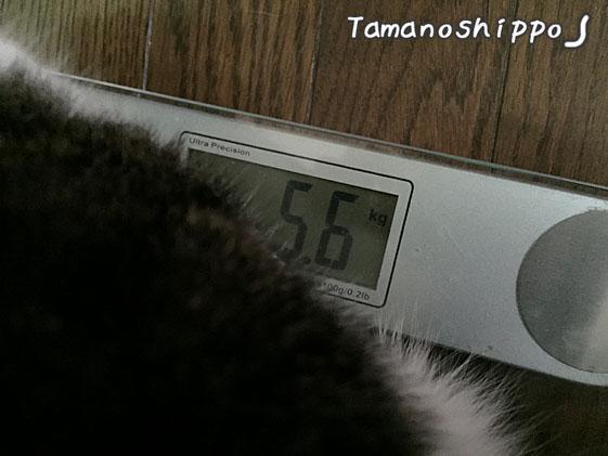 体重測定(ちび)5.6kg