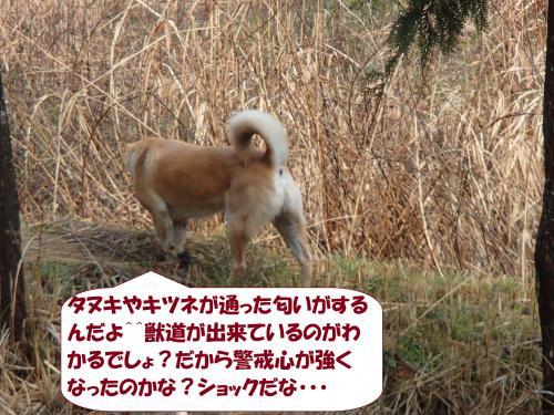 P3140009_convert_20150326110023.jpg