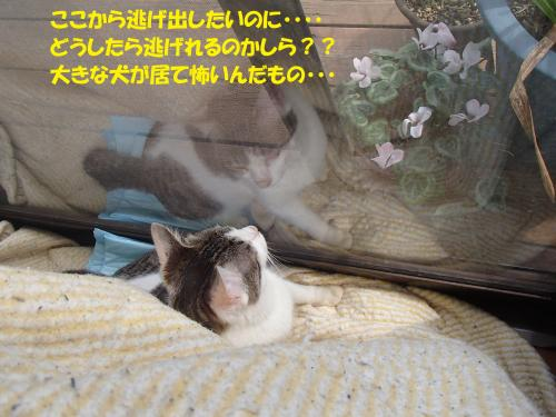 P3160080_convert_20150317125336.jpg