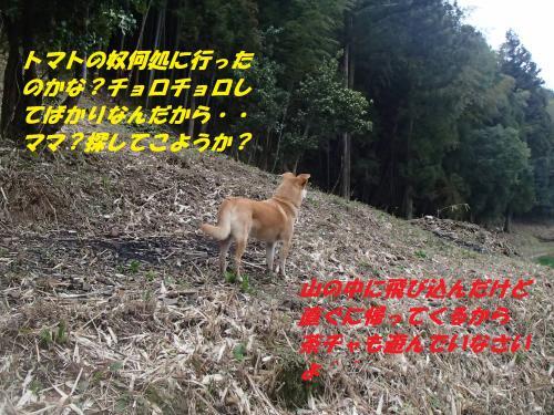 P3200165_convert_20150321130609.jpg
