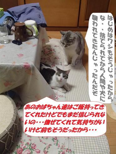 P3220290_convert_20150324095147.jpg
