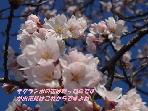 P4020457_convert_20150402135753.jpg