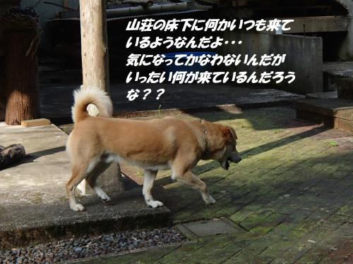 P4020457_convert_20150403132103.jpg