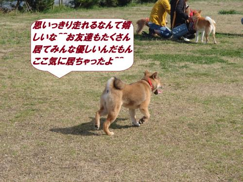 P4120682_convert_20150413153627.jpg