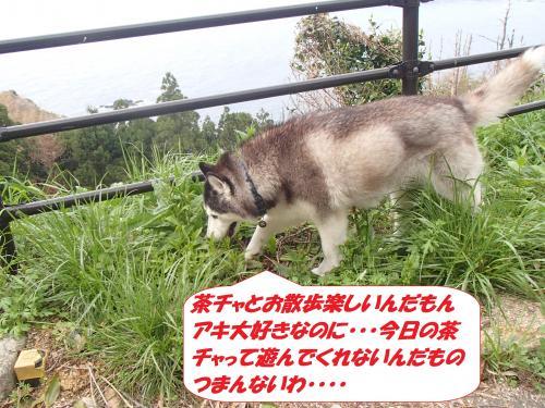 P4160703_convert_20150417104325.jpg