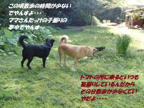 P4170714_convert_20150418131124.jpg