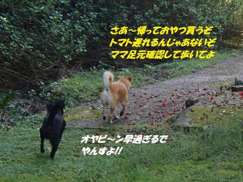 P4170720_convert_20150418131209.jpg