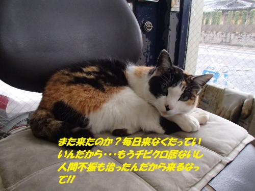 P4190778_convert_20150422132307.jpg