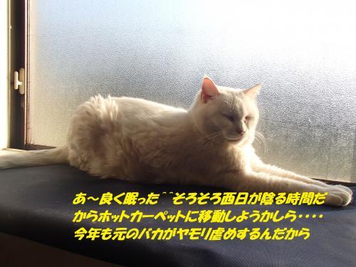 P4210789_convert_20150422132439.jpg