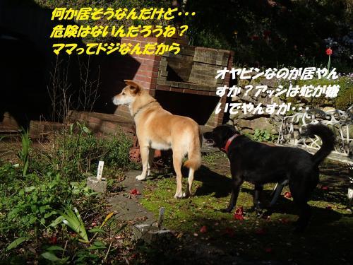 P4220795_convert_20150426124912.jpg