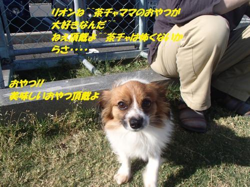P5051049_convert_20150506134836.jpg