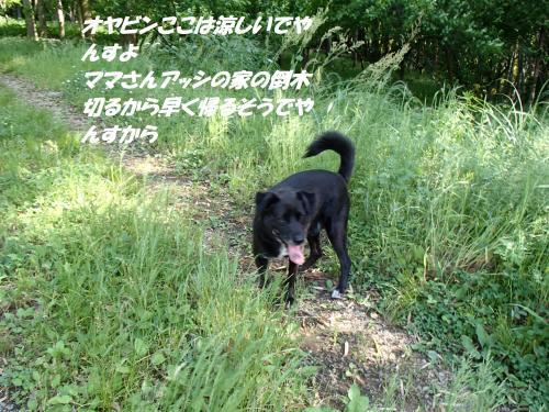 P5131168_convert_20150514091953.jpg