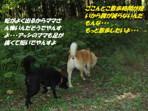 P5131169_convert_20150514092008.jpg
