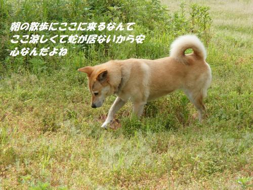P5151196_convert_20150515102209.jpg