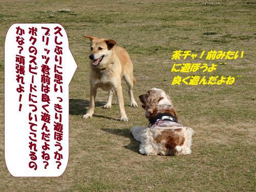 P5161232_convert_20150518092003.jpg