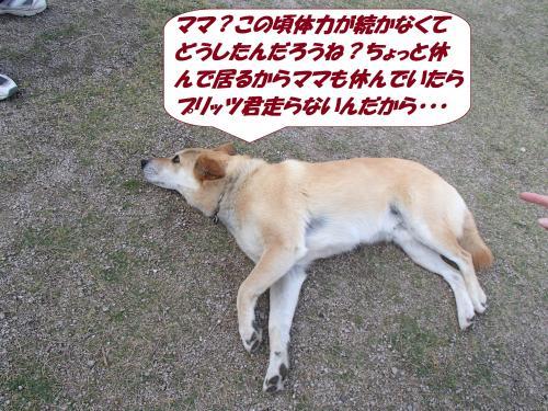 P5161241_convert_20150518092144.jpg