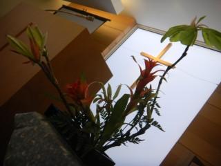 花と講壇16