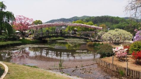 うすべに橋【あしかがフラワーパーク】